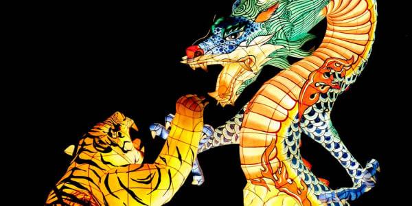Draakoni tiiger: populaarne live-kasiinomäng